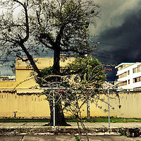 A coniferous tree is seen on the street of a residential suburb while a usual afternoon storm approaches in Quito, Ecuador, 19 October 2014.