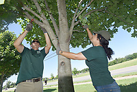 NWA Democrat-Gazette/FLIP PUTTHOFF <br /> TIME FOR A TRIM<br /> Dana Torczon (cq) (left), with the Bentonville Parks and Recreation Department, and Madaya Dunaway trim trees Tuesday June 25 2018 at Orchards Park in Bentonville. The two worked along Southeast J Street.