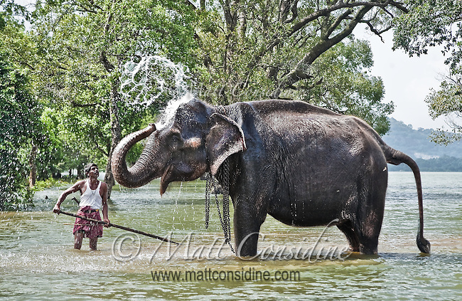 A mahout and his elphant bathing in an inland lake.<br /> (Photo by Matt Considine - Images of Asia Collection)