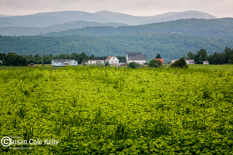 Potato fields in New Canada, Aroostook County, ME