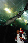 San Francisco: Family looking at fish tunnel at Aquarium of the Bay at Pier 39.  Photo copyright Lee Foster. Photo # casanf104098.