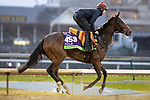 November 1, 2018: Happily (IRE), trained by Aidan P. O'Brien, exercises in preparation for the Breeders' Cup Mile at Churchill Downs on November 1, 2018 in Louisville, Kentucky. Alex Evers/Eclipse Sportswire/CSM