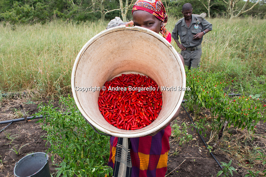 Maputo Elephant Game Reserve, Mozambique.<br />