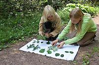 Kinder lernen spielerisch Blätter, Blatt, Laub von Bäumen kennen