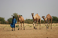 Camels and their owners in the Thar desert near Jaisalmer, Rajasthan, India. The Thar desert borders Pakistan and the Sam Sand Dunes is a popular tourist attraction..Photo by Suzanne Lee