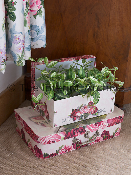 A suitcase and box covered in matching floral paper have been arranged to display a variegated houseplant in the corner of this bedroom