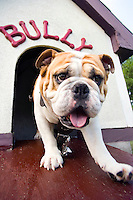 Bully XIX, TaTonka, in dog house<br />
