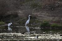 Presa ,el Molinito, Nature, Conservation