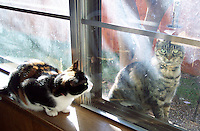 Calico cat looking at tabby cat