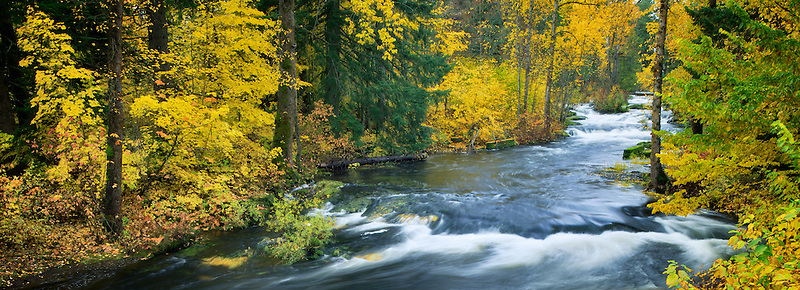 Trout Lake Creek in fall color. Washington