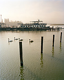 AUSTRIA, Podersdorf, swans swim in Lake Neusiedler See, Burgenland