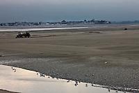Europe/France/Picardie/80/Somme/Baie de Somme/ Le Hourdel: Paysage  de la Baie de Somme en fond Le Crotoy