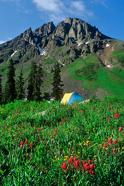 A colorful tent camps amidst a meadow of wildflowers, underneath Stony Mountain, in Yankee Boy Basin, near Ouray, Colorado.
