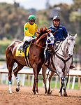 MAY 27: Vasilika with Flavien Prat before the Gamely Stakes at Santa Anita Park in Arcadia, California on May 27, 2019. Evers/Eclipse Sportswire/CSM