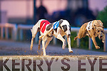 3514  Gliding Past the rest: Took The King crossing the finishing line in the Droopys Deco/Boherduff Light Sweepstake Final at Kingdom Greyhound Stadium on Saturday night..