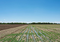 Irrigated land near the town of Crowley, Colorado, Thursday, May 19, 2016. When most farmers sold their water rights in the 1980s, David Tomky and his family held on to their's. As a result, they are still able to irrigate their farm land. Crowley County, once a thriving agricultural community with over 50,000 acres of farm land, sold it's water rights the City of Aurora for municipal use and now farms a little more than 5,000 acres of land. The result has seen dried and dead farm land and abandoned homesteads. Crowley County represents a dire look at how mismanaged water rights can have devastating effects on an already drought prone region.<br /> <br /> Photo by Matt Nager