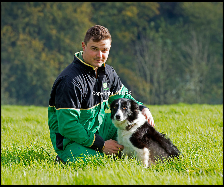 BNPS.co.uk (01202 558833)Pic: LeeMcLean/BNPS<br /> <br /> Farmer Josh Sibley (22) and his dog Winnie (3) at Stoke Water Farm.<br /> <br /> Squashed border collie Winnie gives birth to six Xmas miracles.<br /> <br /> Over keen sheepdog Winnie was run over by a 15 ton tractor whilst working with her owner Josh Sibley(22).<br /> <br /> But Josh is now celebrating his own Christmas miracle as he will be spending it with her six puppies - who all survived the accident.<br /> <br /> Winnie the border collie was pregnant at the end of October when she chased a rabbit under a huge forage harvester and got caught under the 4ft-wide rear wheel.<br /> <br /> Josh thought Winnie was dead but despite puncturing both lungs and fracturing her pelvis the three-year-old defied the odds and now has six mischievous pups to look after.