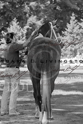 Winning Colors (Caro) photographed at Saratoga Race Course during the 1989 meeting