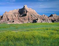 SDBD_010 - USA, South Dakota, Badlands National Park, North Unit, Yellow sweet clover blooms beneath soft eroded sediments of Vampire Peak, Cedar Pass area.
