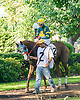 Ritzy Lass before The Winter Melody Stakes at Delaware Park on 9/15/16