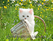 Marek, ANIMALS, REALISTISCHE TIERE, ANIMALES REALISTICOS, cats, photos+++++,PLMP2241,#a#