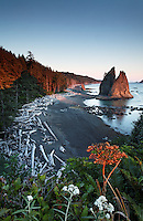 Sea stack at sunset, Rialto Beach, Olympic National Park, Washington State, USA
