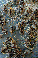 Group of ducklings for sale at the town weekly market in Fuli, Guangxi, China.