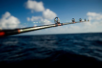 For $50, private deep sea fishing trips with local fisherman can be  arranged with the many tourist companies based along the Caribbean coast of Nicaragua. Amongst the main catch for local fisherman of shrimp and lobster available fish include: snook, tarpon, jack, mackerel, dorado, red snapper and barracuda..