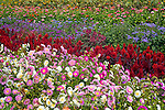 Flower Garden of Annuals