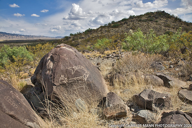 A petroglyph of a cat-like animal  keeps watch on a hilltop at the Three Rivers State park  near Tularosa, New Mexico.