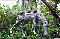 BNPS.co.uk (01202 558833)<br /> Pic: Dreweatts/BNPS<br /> <br /> A bronze horse estimated at &pound;5,000.<br /> <br /> A remarkable collection of giant bronze animals has emerged for auction and is tipped to sell for &pound;40,000.<br /> <br /> The menagerie of exotic animals includes a 7ft tall giraffe, a 9ft long elephant and a 1,800lb stag.<br /> <br /> Also included in the collection are a lion, a cheetah, a panther, a rhinoceros, a hippopotamus, a crocodile, a deer, a wild boar, a horse and various bronze birds.<br /> <br /> They were consigned by a vendor in Berkshire who collected the bronze animals with her late husband over the course of 20 years.