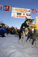 Susan Butcher's team dog jumps in anticipation of leaving 2007 Iditarod ceremonial start in honor of Susan