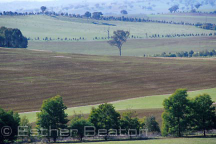 Panoramic view of typical cleared sheep-wheat belt of southewestern slopes of Gt Div Ra, Riverina area of NSW.