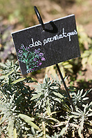 Europe/France/Midi-Pyrénées/46/Lot/Castelfranc: Le Jardin des Sens - jardin d'inspiration médiévale -  les plantes aromatiques