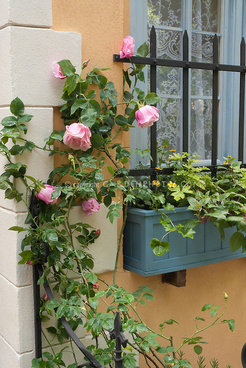 Home landscaping with climbing roses, pretty windowbox next to window with marigolds and geranium foliage