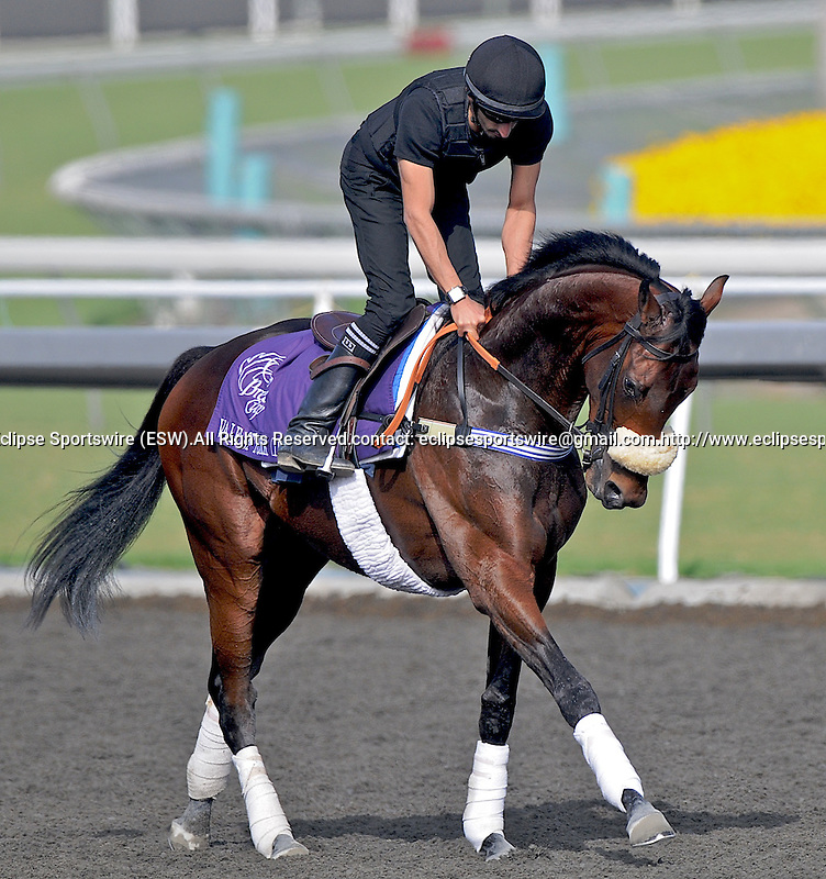 5 November 2009:  Vale Of York works out in preparation for the Breeders Cup at Santa Anita Race Track in Arcadia, CA.