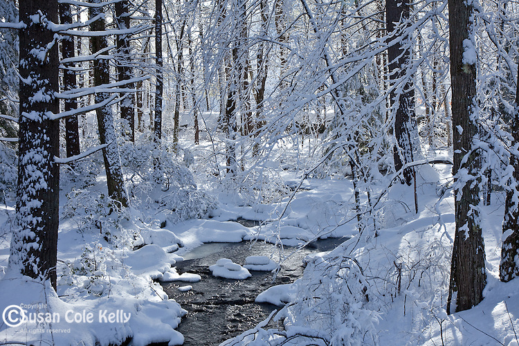 A snowy day on Gould Mill Brook in Mason, NH, USA