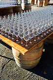 USA, Oregon, Willamette Valley, wine glasses are lined up for an event called Bounty of the County at Sokol Blosser Winery, Dayton
