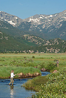 A trout fisherwoman is trout fishing in the Big Thompson River in Moraine Park in Rocky Mountain National Park.  She is practicing catch & release and carefully un-hooking the fish.