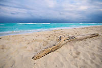 Driftwood on a sandy beach of turquoise water