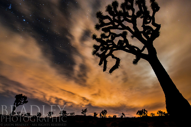Joshua Trees are just fun to photograph. Their bizarre morphology, when silhouetted, is something reminiscent of the days when dinosaurs roamed, and you can play with this in all sorts of ways...This shot was taken looking toward the southwest as the moon was getting ready to set and some lights from a neighboring city provided the orange glow. While on tripod, I was at ISO 1600, at 30 seconds, and at f5.6. I didn't want star trails with this image as it's all about the cloud window allowing us to peak through to the stars. Any longer than 30 seconds and the stars and clouds would trail too much. So, aperture had to be kept wide. The background trees are a tad soft, but it seems to work.