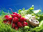 Radish, mushroom and cucumbers, artistic food still life in green grass under bright sunny sky