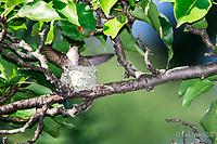 Hummingbird I & II