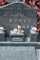 Individual graves for lost loved pets. Gravestones are designed with thoughts.  grave stone has got message as &quot;Many thanks from Suzuki family&quot;<br /> <br /> Jikeiin is the biggest pet graveyard in western suburb of Tokyo.  This has founded in 1921 and 13000m2 land space.  They have 16 cremation machine which can cremate from small animal like turtle or birds to big animals like tigers and bears.  They provide buddism style funeral ceremony and graves to pet owners who have lost their loved pets.  Jikeiin is the non-sectarian temple.
