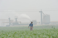 "A farmer tends to his crops in stifling pollution outside a cement plant at Xiditou.  Xiditou is known as one of China's worse ""cancer villages"" where a reported ten percent have died from cancer."
