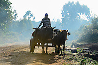 KENYA, County Bungoma, rural transport with ox / KENIA, Transport mit Ochsenkarren