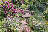 Path with reycled conctete pavers as stepping stones through Roger Raiche Berkeley Maybeck Cottage garden