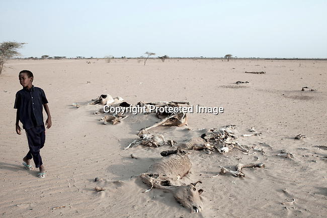 DILMANYALE, KENYA - JULY 4: A boy stands next to carcasses in a barren area on July 4, 2011 in Dilmanyale, Kenya. Two successive poor rains, entrenched poverty and lack of investment in affected areas have pushed millions of people into a fight for survival in the Horn of Africa. This is the driest this area has been since sixty years. People in smaller town are usually fortunate to have water. In rural areas, most wells has dried up and some people was as much as eight kilometers to fetch water. Most of the livestock has perished and the remaining stock has often been taken far away for better conditions. Many has even crossed into neighboring Somalia for better pasture. (Photo by Per-Anders Pettersson).