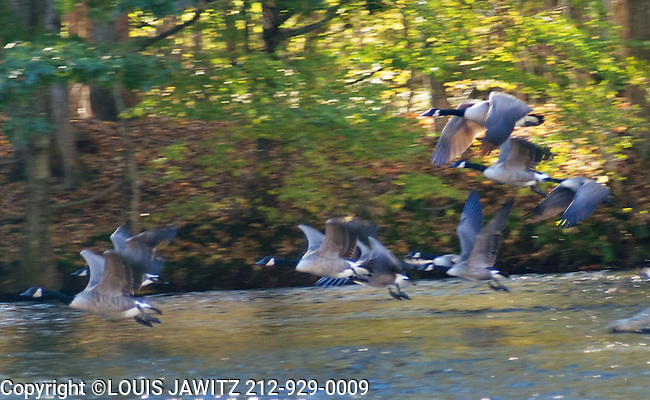 Motion, NEVERSINK, Goose, Day, Reflection,