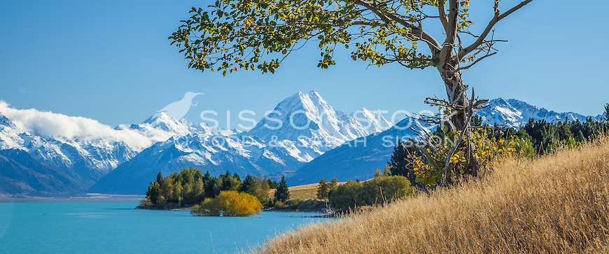 Wild apple tree - Lake Pukaki. Mt Cook & fall colour in background.  Mackenzie basin, South Canterbury New Zealand. Panorama